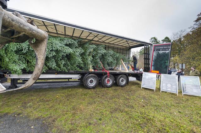 Ratgeber: Weihnachtsbaum-Transport -  Oh, Tannenbaum, wie kommst Du nach Hause?