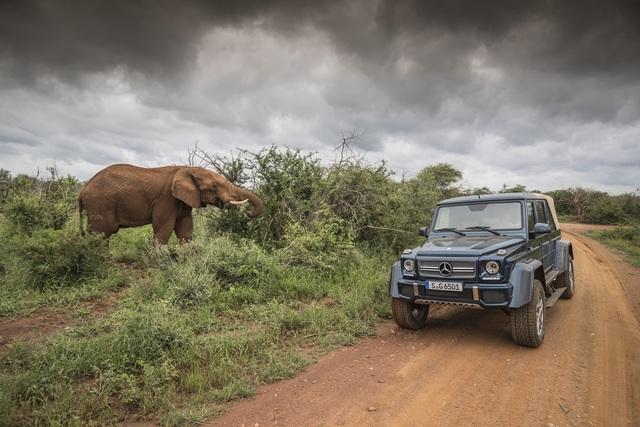 Mercedes-Maybach G 650 Landaulet - Mit dem Jagdschloss auf Safari-Tour
