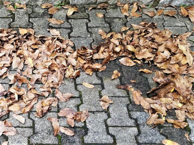 Ratgeber: Sicher unterwegs im Herbst - Bunte Blätter,  Böen und Bremswege