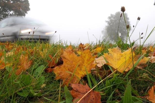 Ratgeber: Sicher fahren im Herbst - Laub, Regen und lange Dunkelheit