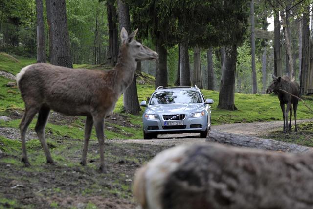Volvo-Sicherheitstechnik - Keine Angst vor dem Elch