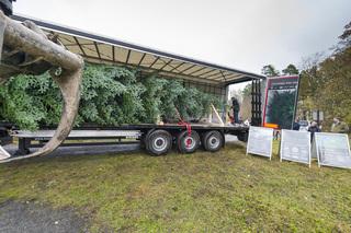 Ratgeber: Weihnachtsbaum-Transport - So klappt die Fichtenfuhre
