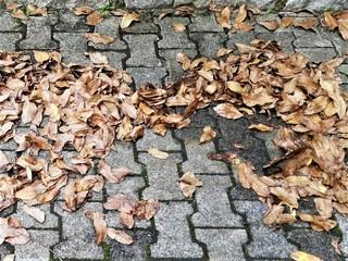 Ratgeber: Sicher Autofahren im Herbst   - Schlechtes Wetter, rutsch...