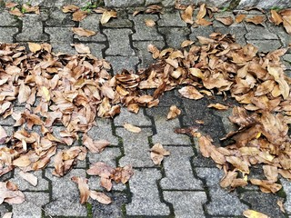 Ratgeber: Sicher unterwegs im Herbst - Bunte Blätter,  Böen und Bre...