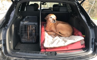 Ratgeber: Hunde im Auto transportieren  - Die Rücksitzlehne als Sch...
